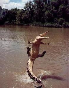 Jumping_Gator