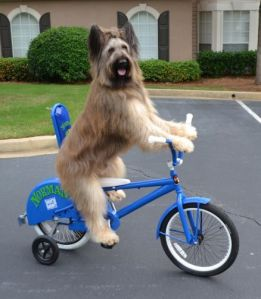 Norman the Bike Riding Dog