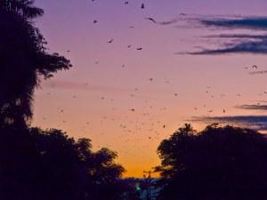bats_at_dawn_img_3065