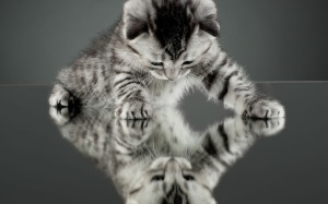 animal-adorable-expression-of-little-cat-on-mirror-hd-wallpapers-widescreen-wallpapers-kitten-mirror-cat-in-the-mirror-mary-stolz-cat-mirror-test-mirror-cat-manor-cat-mirror-justin-timberlake-cat-shap